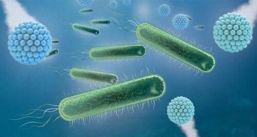 Pathogen Surface Testing